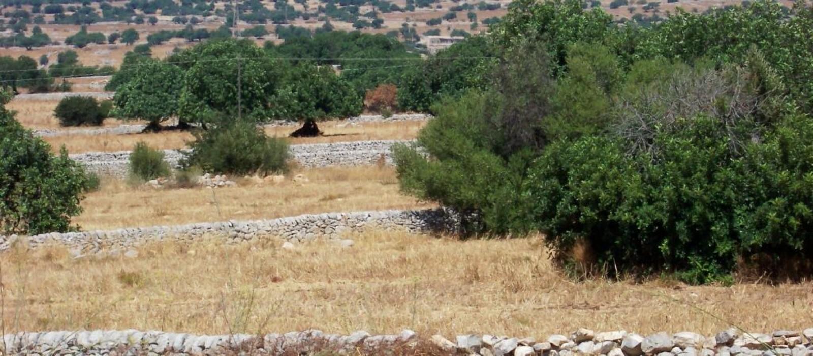 La provincia di Ragusa: masserie e muretti a secco