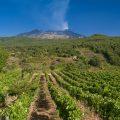 Vini dell'Etna: viaggio tra le eccellenze a marchio DOC