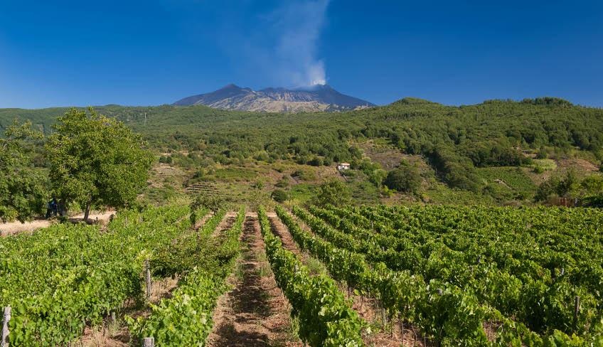 Vini dell'Etna