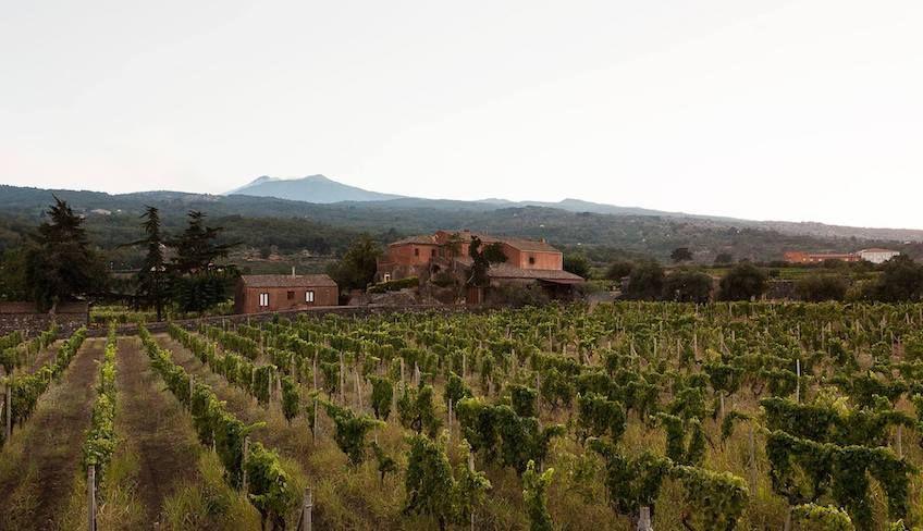 cantine etna da visitare  - aziende vinicole etna
