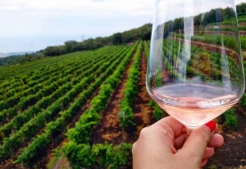 degustazione vini etna - cantine etna degustazione