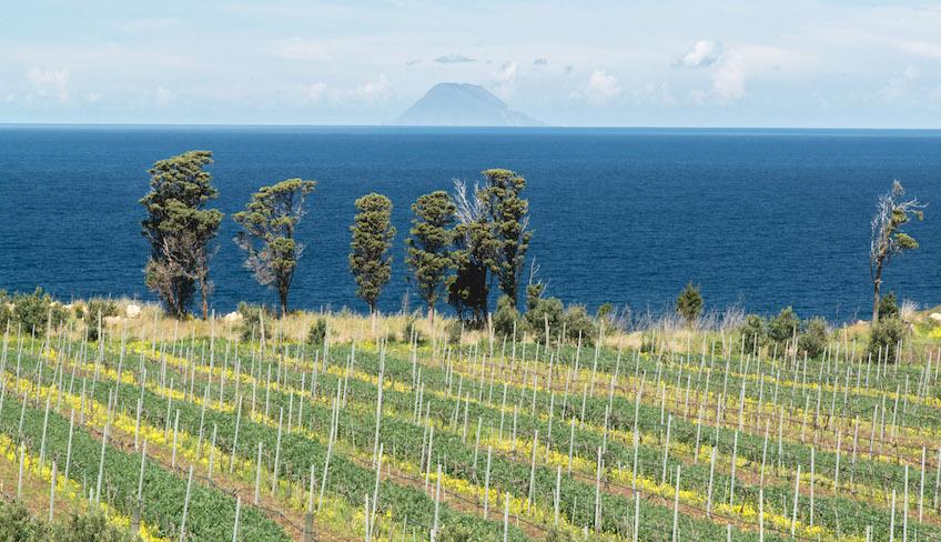 cantina messina vino faro doc degustazione vini sicilia