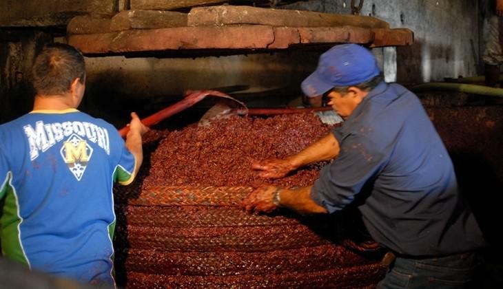 mangiare sull'etna - degustazione vini etna