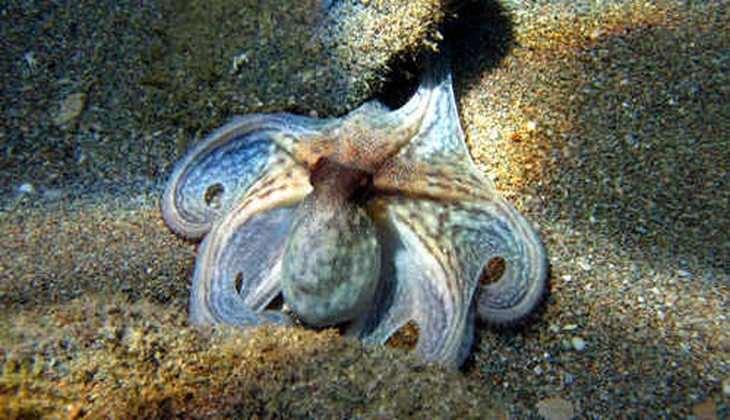 diving taormina - diving messina