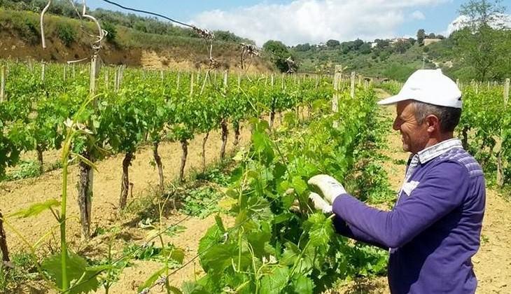mangiare a caltagirone - aziende vinicole catania