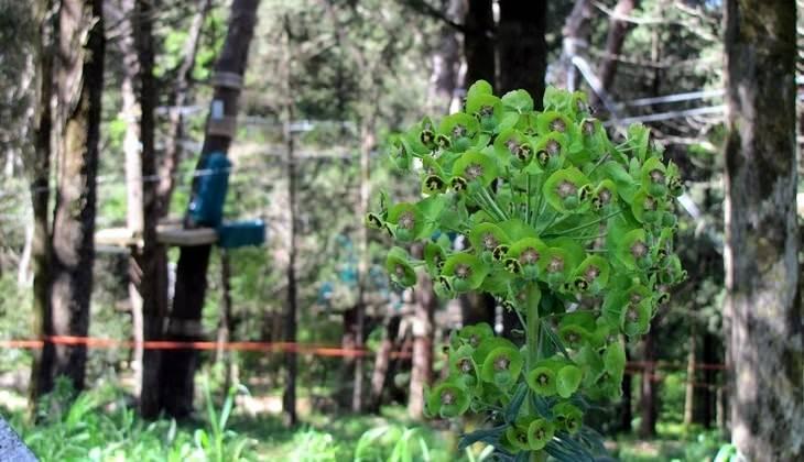 bosco di alcamo - trekking trapani