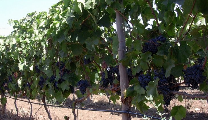 cantine ragusa - aziende vinicole ragusa