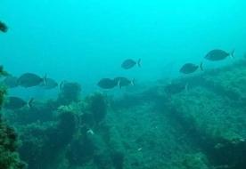 diving trapani - diving marsala