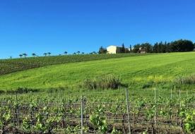 cantine di vino degustatore di vini vini naturali
