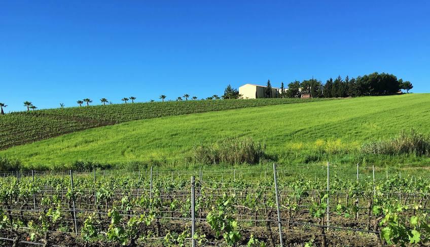 degustazione vini palermo-cantine palermo-cantine siciliane da visitare