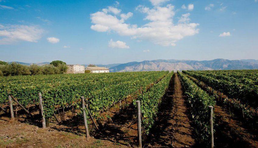 degustazione vini etna - mangiare sull'etna