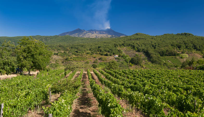 degustazione vini etna aziende vinicole etna cantina siciliana