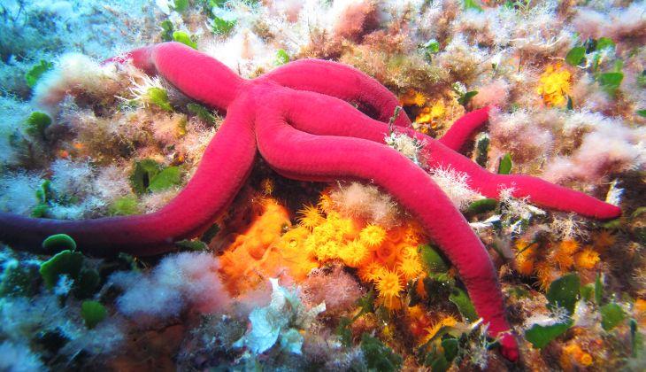 Snorkeling Taormina - Snorkeling Catania