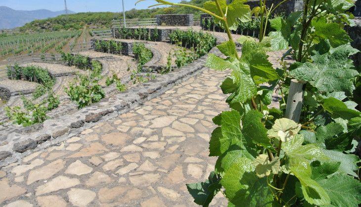 Cantine Etna - tour enogastronomici Sicilia