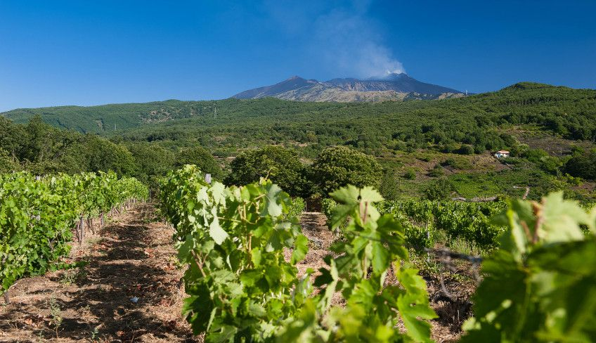 Cantine Etna - Cosa vedere sull'Etna