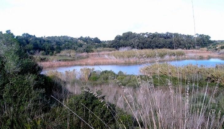 riserve naturali sicilia - birdwatching sicilia