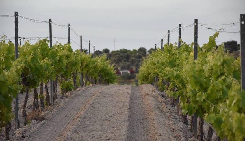azienda agricola noto - degustazione vini noto