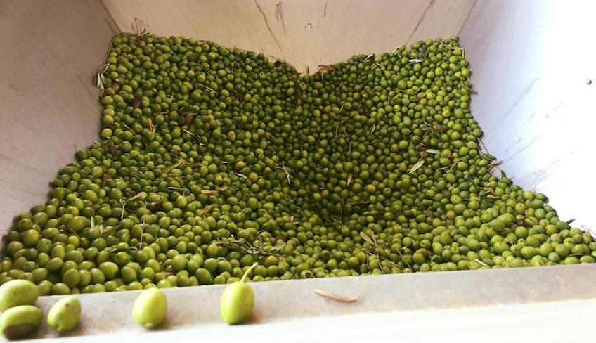 Cosa fare a trapani-Olio extravergine di oliva trapani-Frantoio trapani